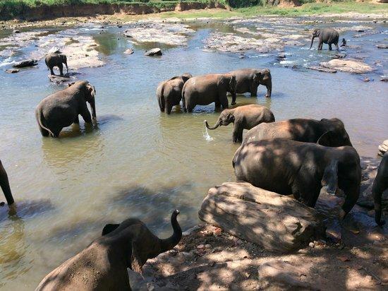Sevana Agro: Elephant Orphanage in Pannawala