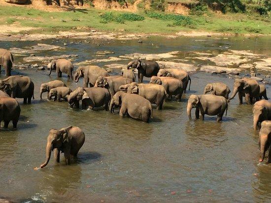 Sevana Agro : Elephant Orphanage in Pannawala
