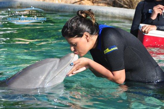 Miami Seaquarium: Dolphin Odyssey