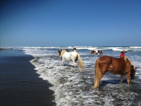 Hotel Magellan Inn: Horses on the Beach