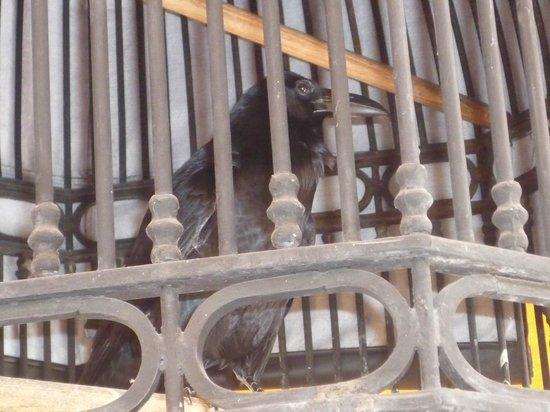 Destilería La Rojeña de José Cuervo: El Cuervo