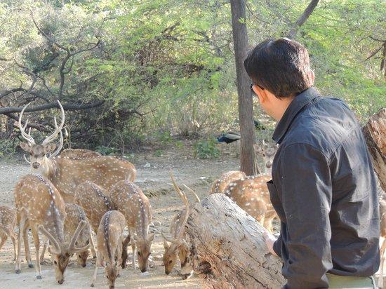 Shikarbadi: Deer Feeding