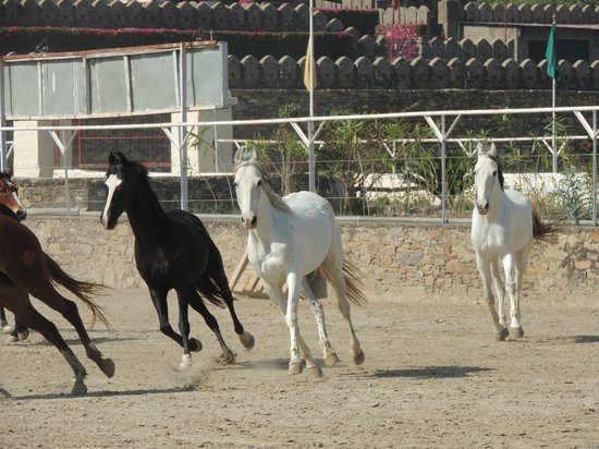 Shikarbadi: Horses