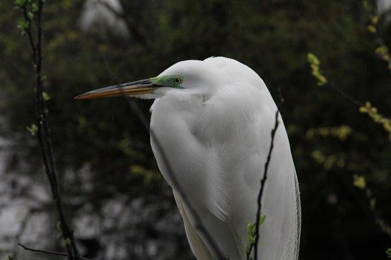 Gatorland : cool birds