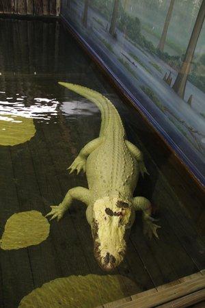 Gatorland: amazing