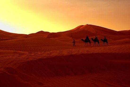 IndiGo Safari Morocco - Private Day Tours: Camel trek in indigo safari marrakech