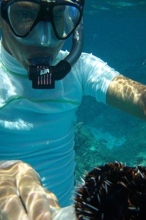 Arrecife del descubrimiento: Reyanldo