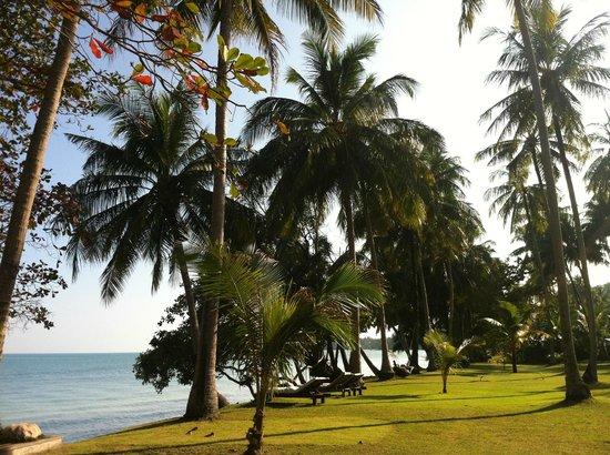 Koyao Island Resort: le jardin