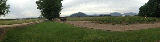 Rayuela Wine & Grill at Vina Viu Manent: La vista del viñedo desde la terraza