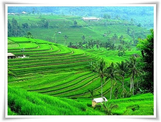 Tour Bali Guide - Day Tours