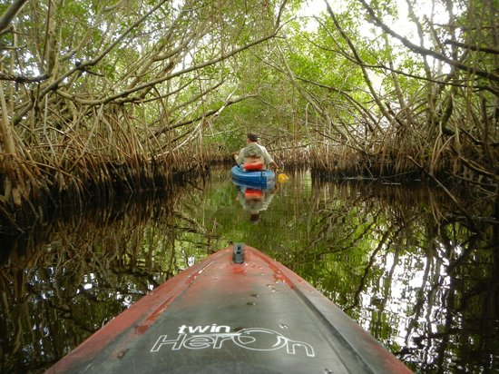 Tour the Glades - Private Wildlife Tours: Following Tod through the Mangroves