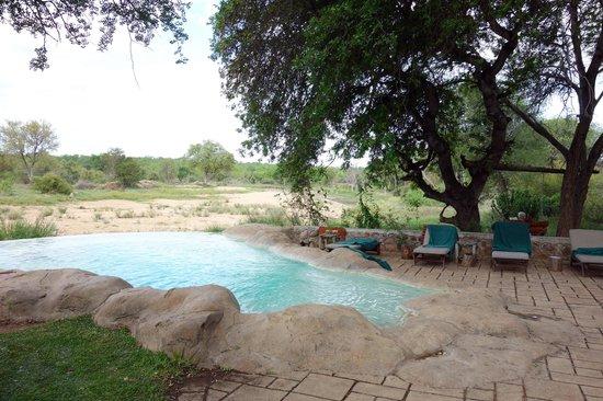 Motswari Private Game Reserve: Pool