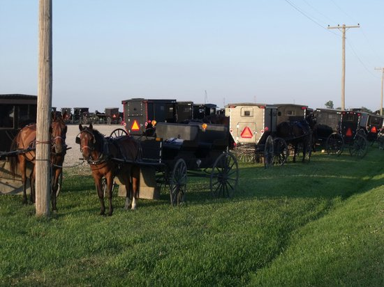 Arbor House Country Inn: Amish Produce Auction open for tourism.