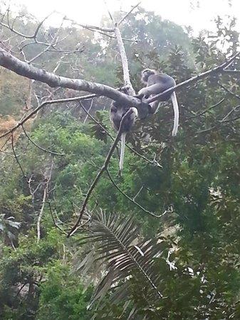 Tonsai Bay Resort : monkeys