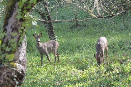 Le Jardin Sarlat: Deer in Orchard