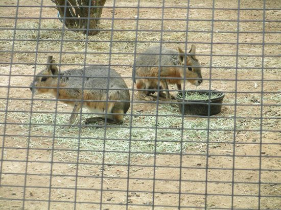 Noah's Ark Rehabilitation Center: Some weird rabbit deer looking things.