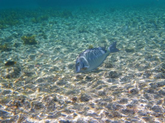 Atalaia Beach: Peixe
