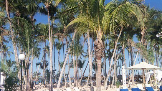 Luxury Bahia Principe Bouganville: Loved the palm trees on the beach