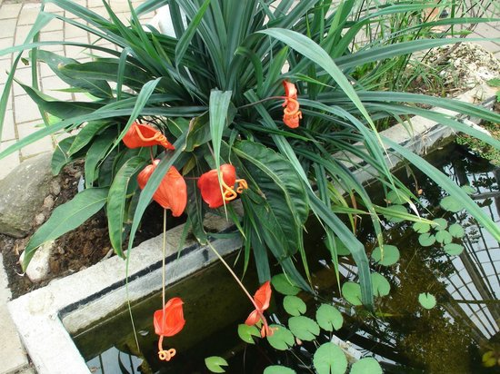 Botanical Gardens (Botanisk Have): сад