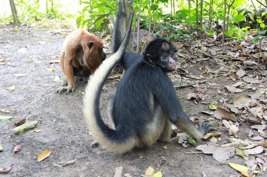 The Monkey Island: Isla de los monos