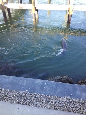 The Boat House Motel: Dolphin swimming near pier off patio