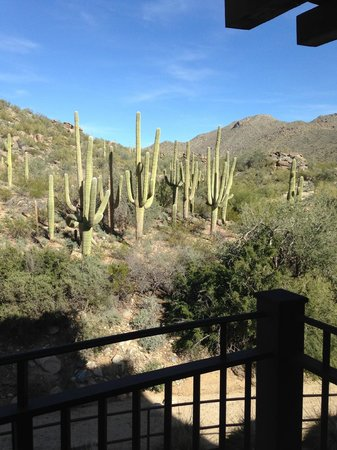 The Ritz-Carlton, Dove Mountain: view from my room
