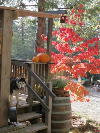 Sunset Inn Yosemite Vacation Cabins: Beautiful Fall Color