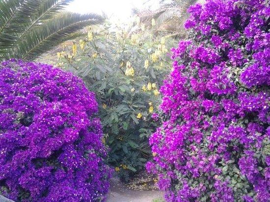 Sahara Playa : Blüte im Januar