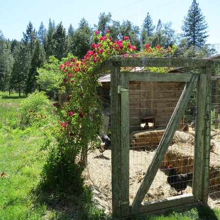 Sunset Inn Yosemite Vacation Cabins: Rustic Chicken Coop