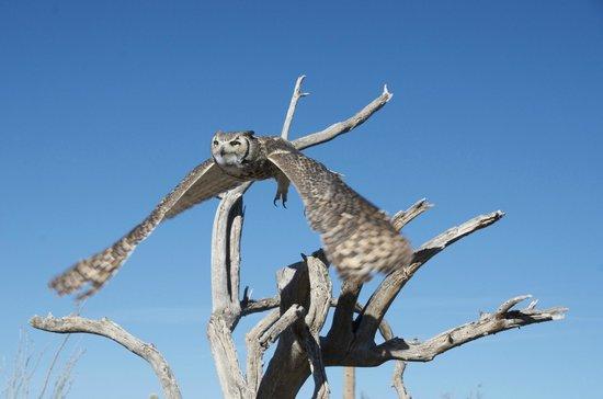 Museo del Desierto Arizona-Sonora: Morning raptor show