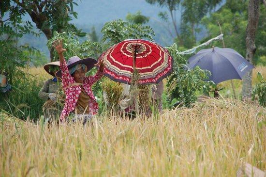 Villa Flow : Wandeltocht door de rijstvelden