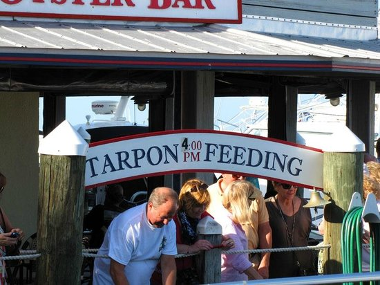 Key West Historic Seaport: Daily tarpon feeding