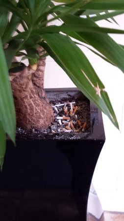 Ibis London Barking: cig butts inside hotel