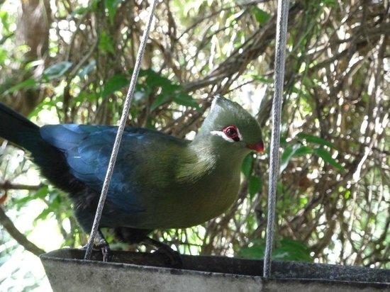 Kingfisher Country House: birds from the varanda