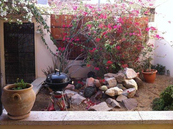 Cactus B&B : Garden