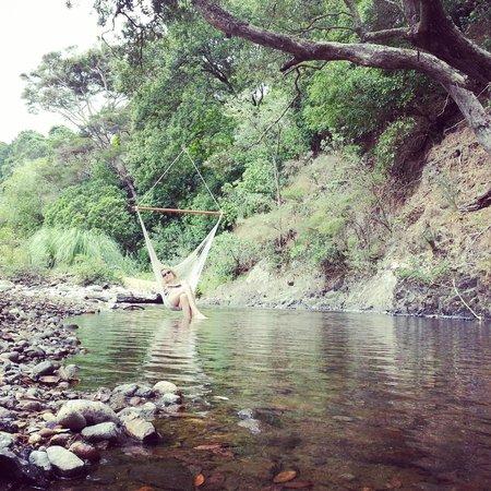 Te Mata Lodge: Relaxing in the Hammock