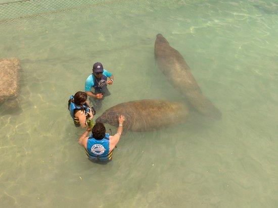 Dolphin Discovery Isla Mujeres: Emocionante demais!
