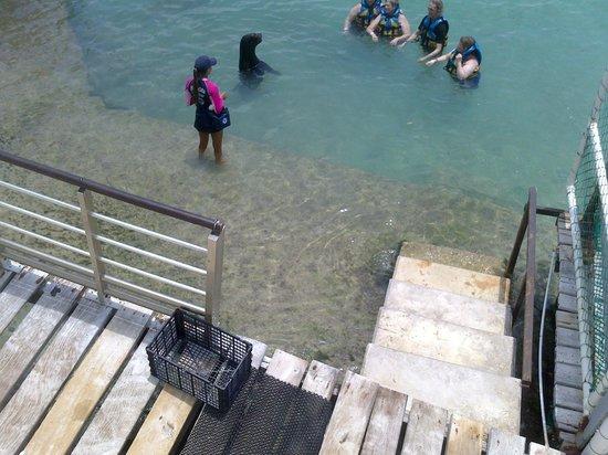 Dolphin Discovery Isla Mujeres: Perfeito!