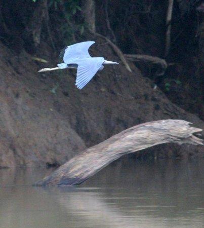 Canoa Aventura: Pretticus Birdicus