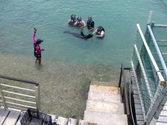 Dolphin Discovery Isla Mujeres: Foca!