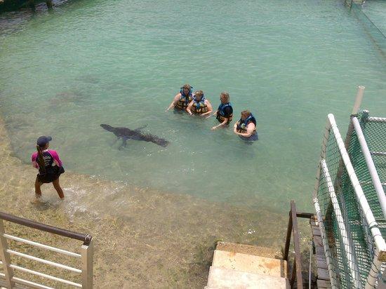 Dolphin Discovery Isla Mujeres: Imperdível!