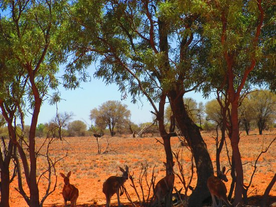 Royal Flying Doctor Service, The Bruce Langford Visitors Centre: The Great Outback