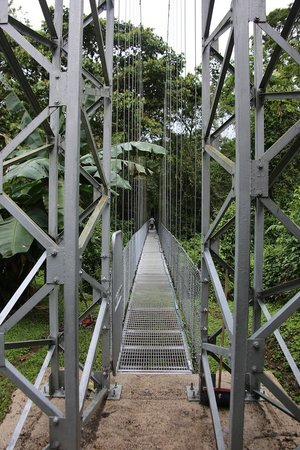 Arenal Hanging Bridges: First bridge heading away from the visitor center.