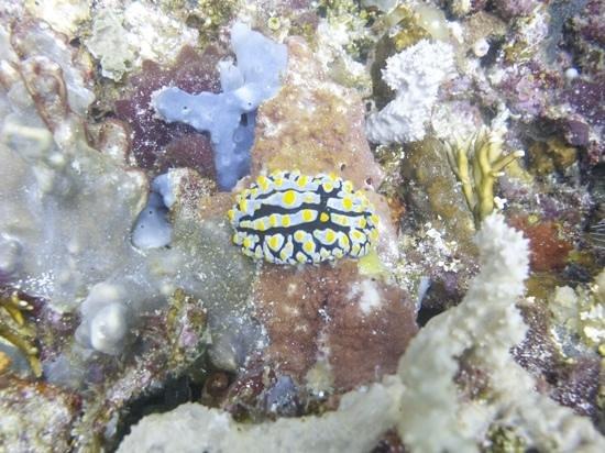 Flores Diving Centre : komodo