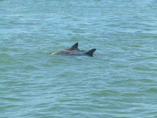 Dolphin Landings Charter Boat Center: Our first sighting