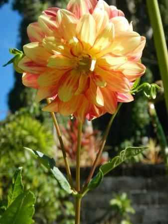 The Tiavi Mountain Escape: Our Flowers