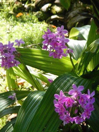 The Tiavi Mountain Escape: Tropical Colours