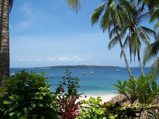 Coral Dreams: paisaje