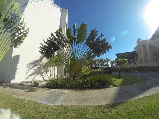Hard Rock Hotel & Casino Punta Cana: Beautiful Palms