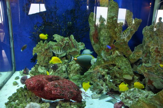 Pietro's on the Ocean: Beautiful Indoor Saltwater Aquarium